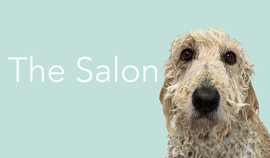 the salon.jpg