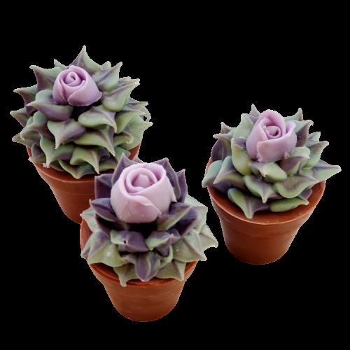 Succulent Soap Purple Rose | 5.5 oz