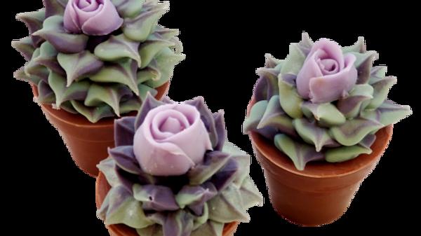 Succulent Soap Purple Rose | 5.5 oz or 6.0 oz or 6.5 oz