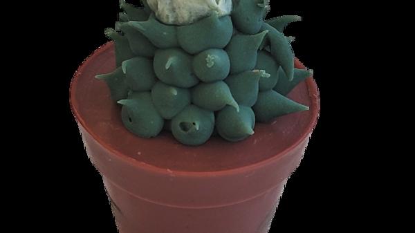 Succulent Soap Green Rose | 4 oz