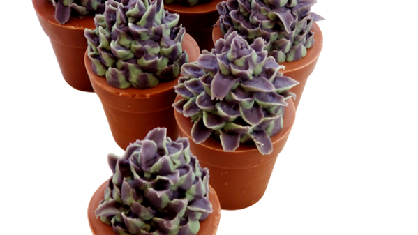 Succulent Soap No Flowers | 5.0 oz or 5.5 oz