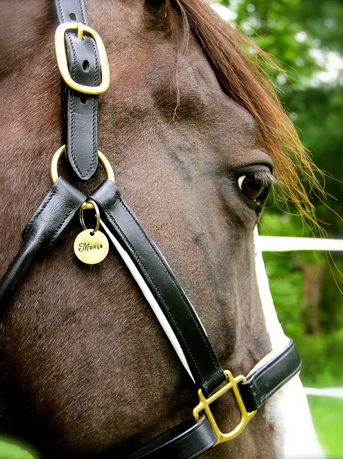 Custom Halter Tag - Design Your Own