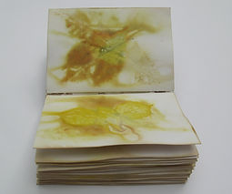 ecoprint artbook book plants nature site specific natural dyes imprints cycles