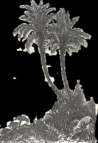 palmiers et paysage2.png
