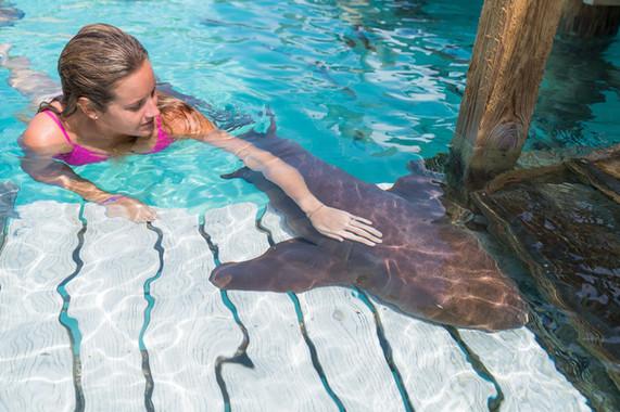 Woman petting nurse shark