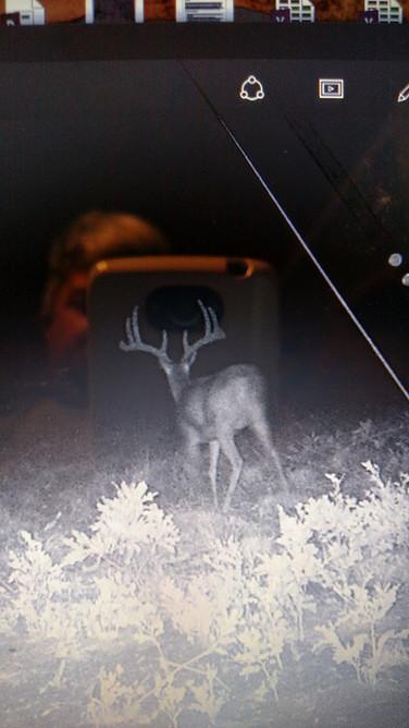 Big bucks abound....