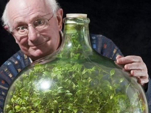 Planta sobrevive em garrafa de vidro fechada sem adição de água desde 1972