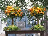 SR-Oranges