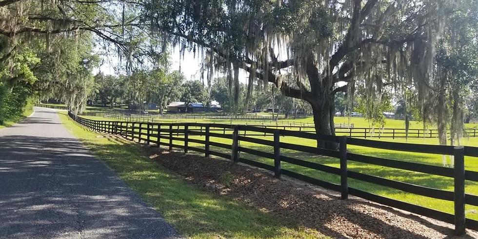 Horse Farm Ride