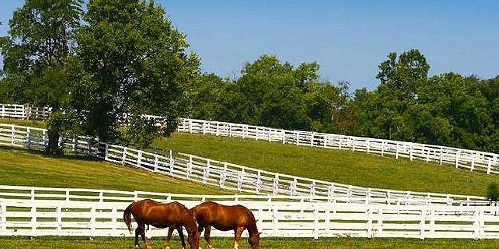Tour Ocala Horse Farms
