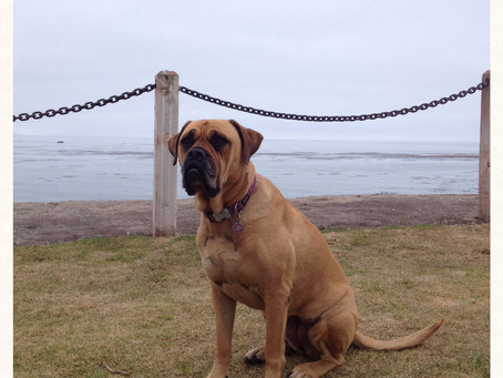Tide Pools and Sand Dogs: From the Central California Coast