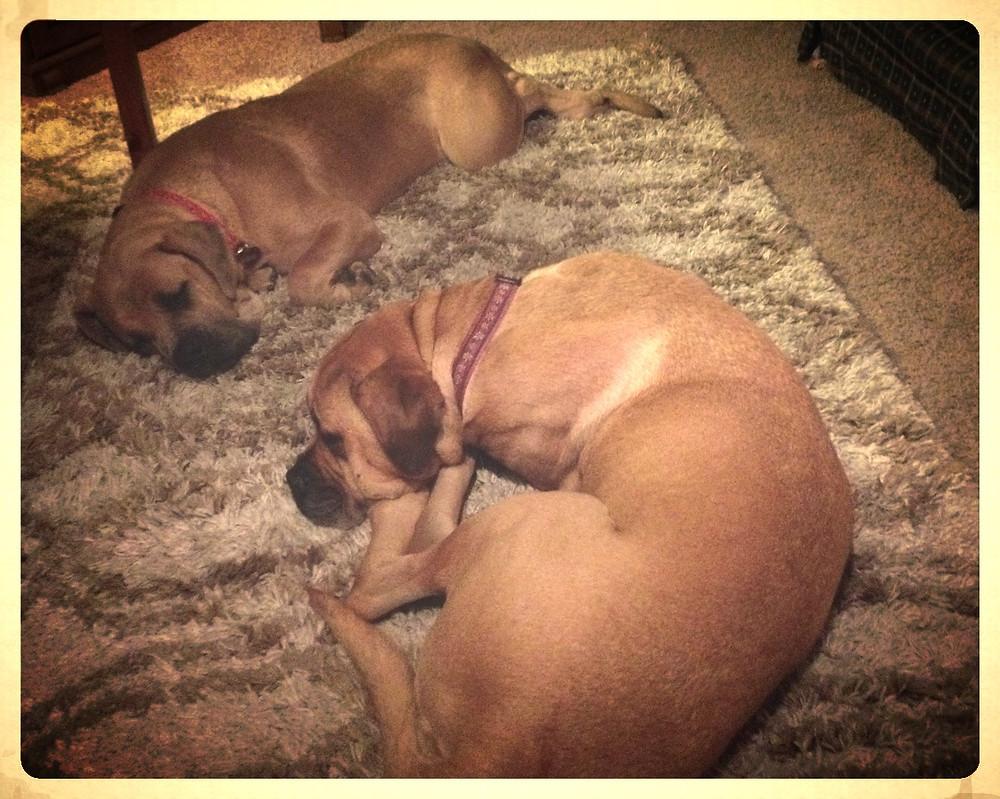 Sleepy dogs.
