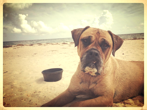 Butter's day at the beach.