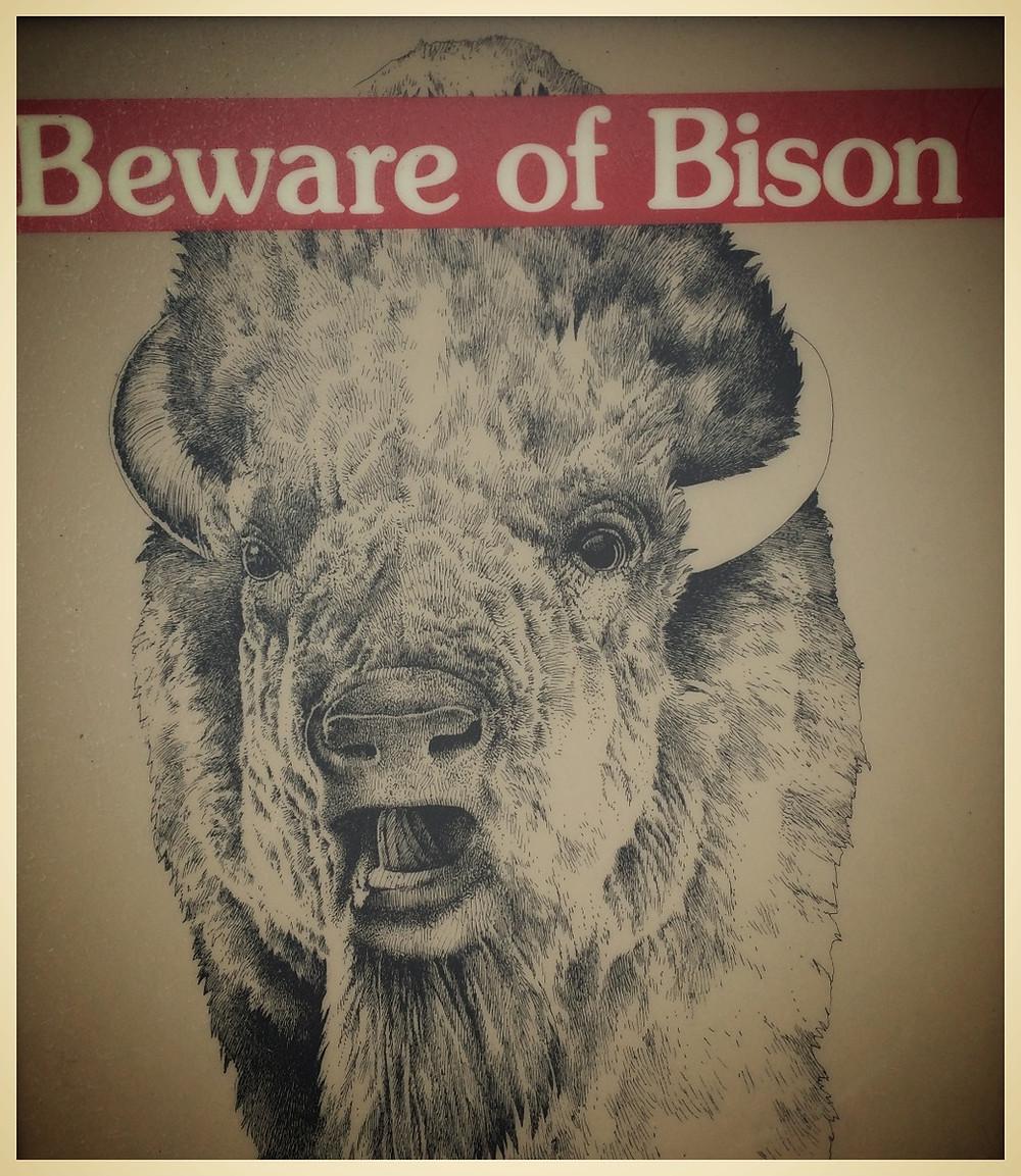 Beware of Bison!