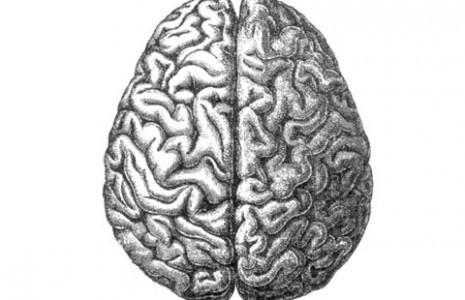 right_vs_left_brain_emotional_communication-465x300.jpg