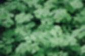 Yonca yaprağı