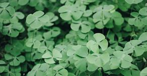 10 Words That Originate From The Irish Language