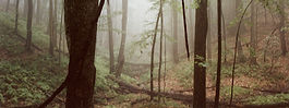 In the woods, quiet and serene.
