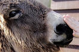 My donkey, Jessie