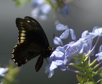 butterfly-flower.jpg