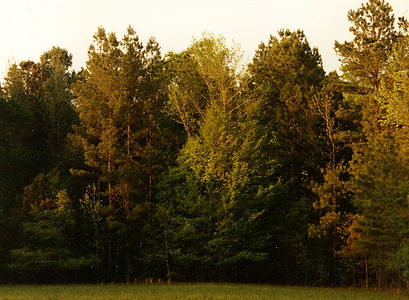 farm-trees-X-.jpg