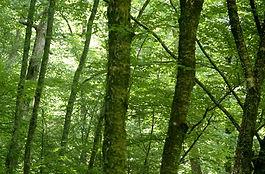Green trees serene
