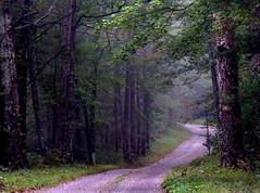 A spiritual path through serene woods