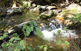 Babbling brook high in the mountains.