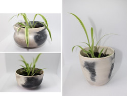 Mother Plant Project