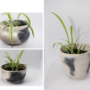 Mother Plant