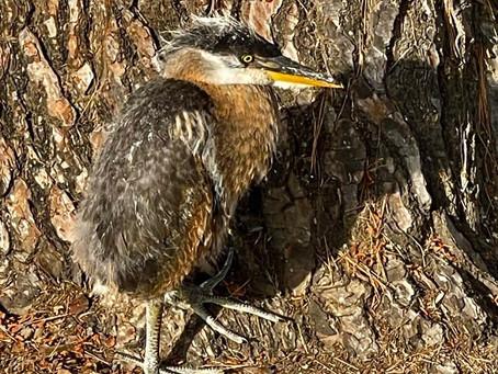 Silver Lake Wildlife Sanctuary to the Rescue