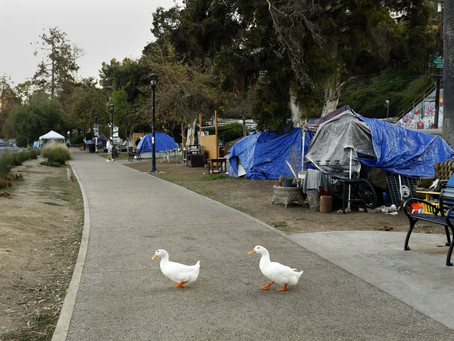 Echo Park Lake: A Cautionary Tale for the Future of Silver Lake's Reservoirs