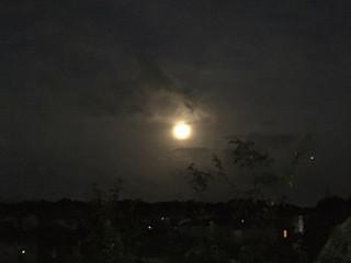 もうじき月食ですね。そして明日はライオンゲートの開く日。