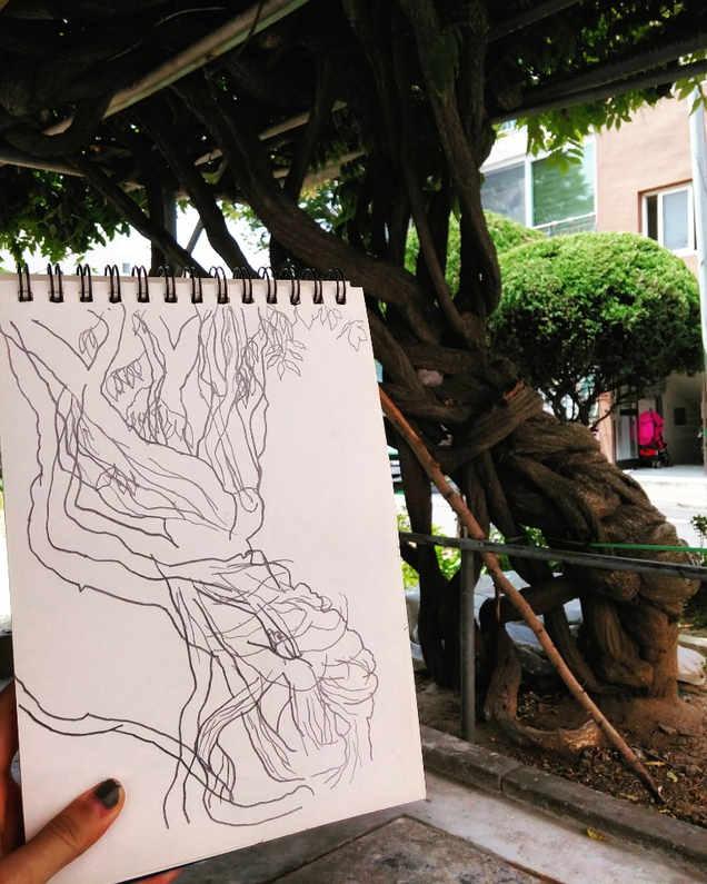 등나무 컨투어드로잉