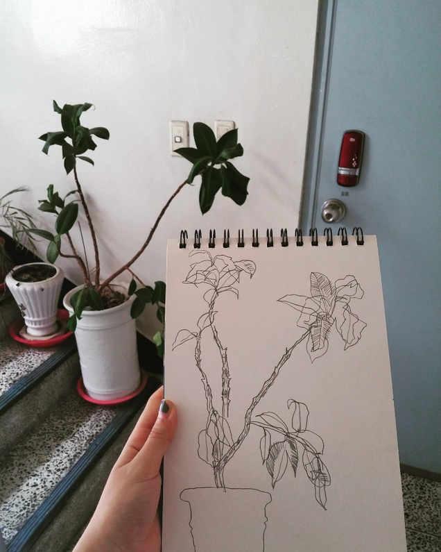 식물 컨투어드로잉
