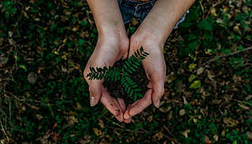 Someone holding a small leafy plant in their hands.