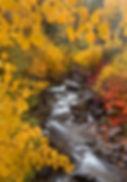 wix Brush Creek View..jpg
