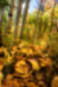 wix Cottonwood trail.jpg