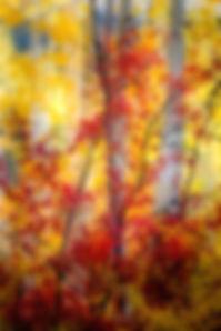 wix red aspen.jpg