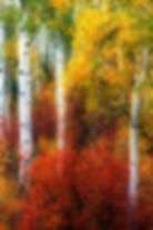 wix Colorful Colorado..jpg