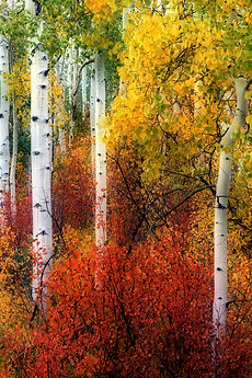 wix Colorful Colorado..jpg