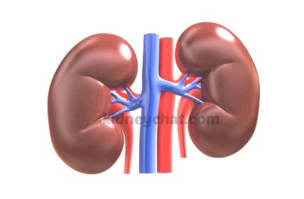 kidneys.jpg