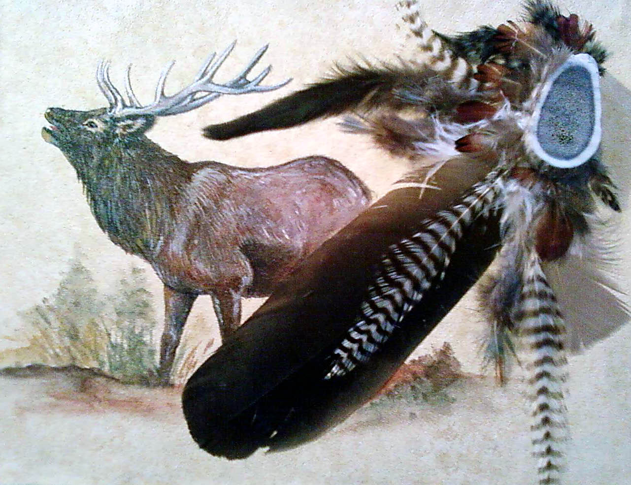 Acrylic/feathers- Elk