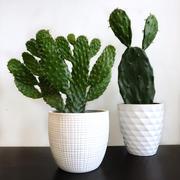 Cactus en ligne