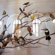 009 C.Ramade.Muséum .jpg