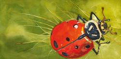 Ladybug by Grace Fong