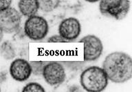 Esosomi.png