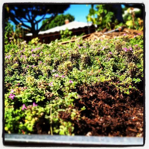 Edible Landscaping Tip of the Week!