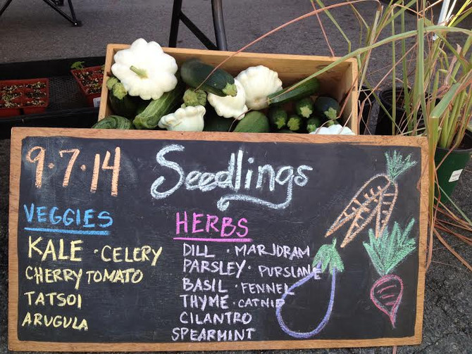 Home Grown Gardens at the Santa Monica Farmer's Market!