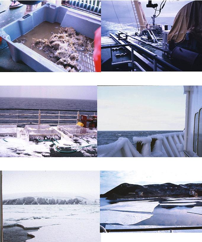Montage ROSS SEA-10.jpg